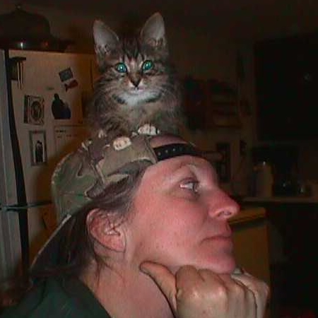 photo: cat on a hat